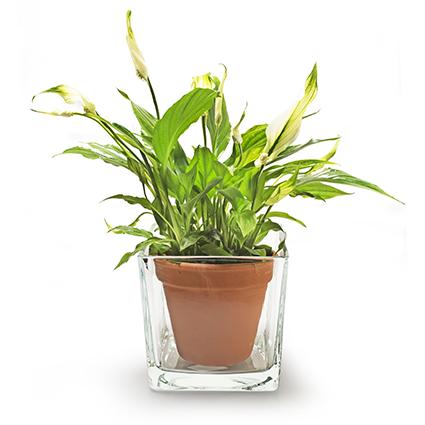 Cube 'piazza' 12x12x12 cm
