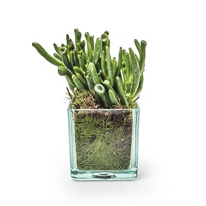 Eco cube 8x8x8 cm