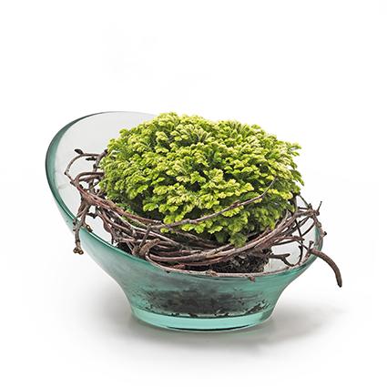 Eco bowl 'eden' h9,5 d16 cm