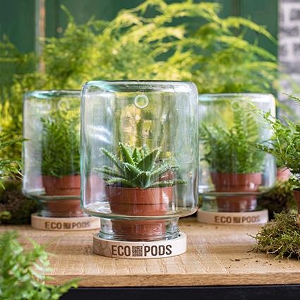 Micro Greenhouse 'eco pods' h20 d15,5 cm