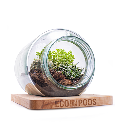 Micro Greenhouse 'eco grove' h16 24x16 cm