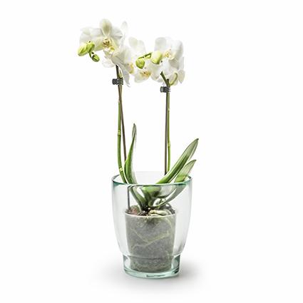Eco orchidpot 'xi' h15,5 d13cm