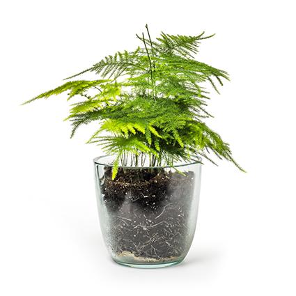 Eco pot 'extra heavy' h12 d13cm