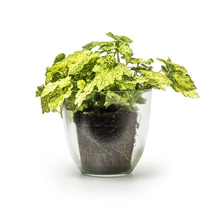 Eco pot 'extra heavy' h14.5 d15.5cm