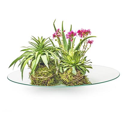 Bowl/plate h6 d60cm