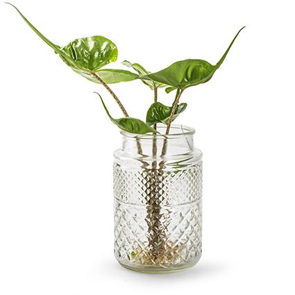 Vase 'aprilia' h19,5 d11 cm