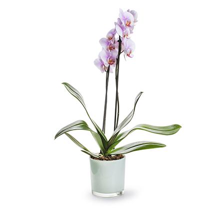 Conical vase 'monaco' mint h12 d11,5 cm