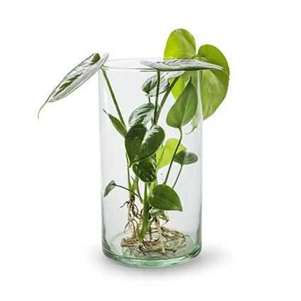 Cilinder 'arthur' mint T h30 d16 cm