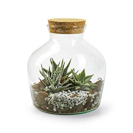 Eco vaas+kurk 'terrarium' h25 d20,5 cm