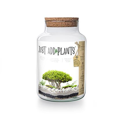 Just add Plants display h30 d19 cm