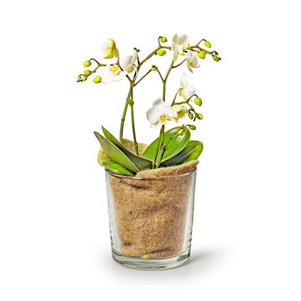 Conical vase 'monaco' h13 d12.5 cm